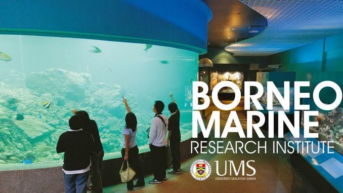 Borneo Marine-UMS