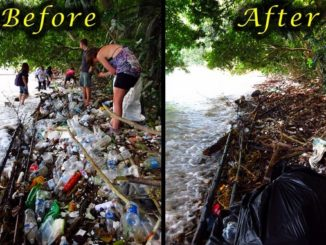 Before and After beach clean program during fieldtrip